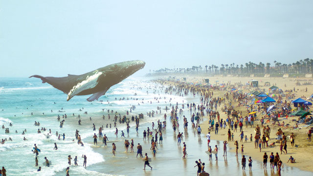 whale swimming above beach goers