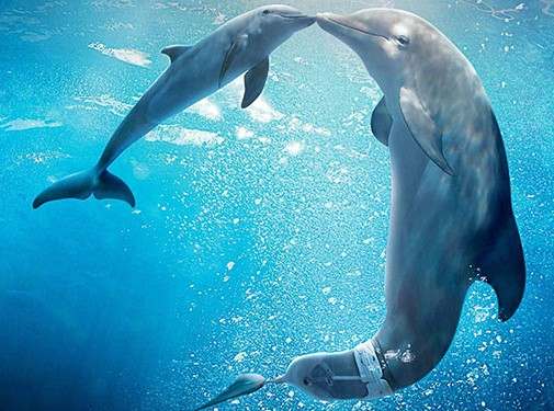 Three out of four new visitors to the Clearwater Marine Aquarium credited the Dolphin Tale movies for their trips to the aquarium, resulting in an estimated $580 million economic boost.
