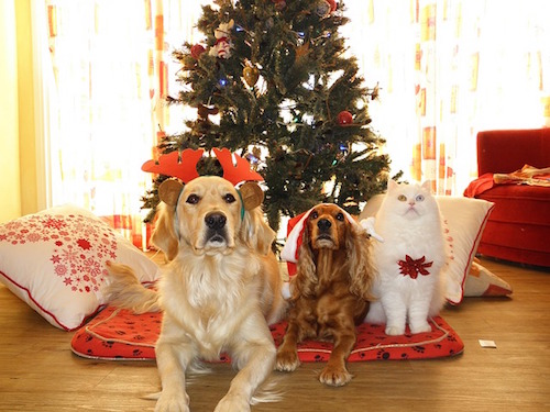 Pets in front of a Christmas tree