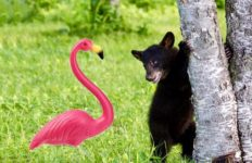 Flamingo and bear beside tree
